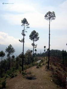 33. Tall trees at dizzing heights