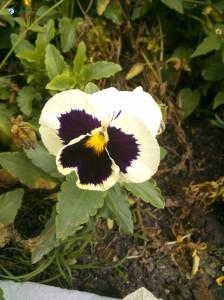 12. Flower resembling butterfly