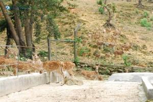 43. Deers