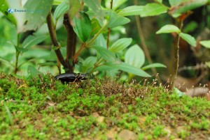 53. A Bug