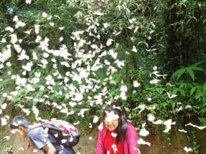 32. Butterfly Effect
