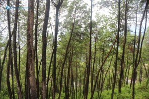 14. Save Trees