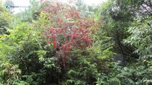 3. Wild Berries