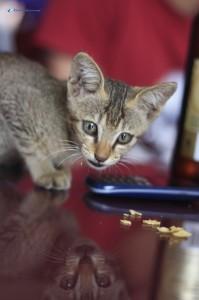 58. Hey kitty....kitty....kitty