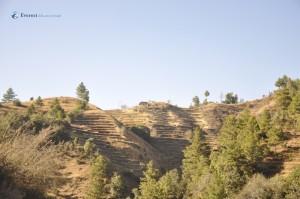 4. Terrace Farming