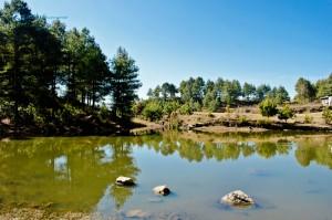 76. Pond
