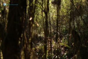 19. Haunted Jungle