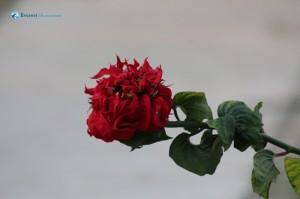 35. Lovely Flower