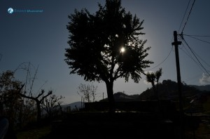 14. Tree eclipse
