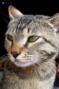 30. Meow, i am cat