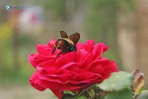 31. Diving inside rose