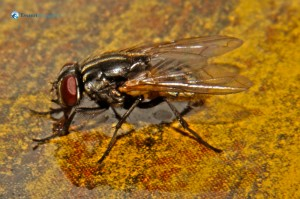 32. Busy housefly