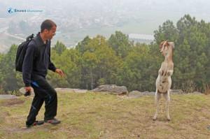 7. Goat ring-master