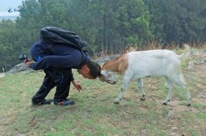 8. Bullfight! Oh! Oh! Goatfight