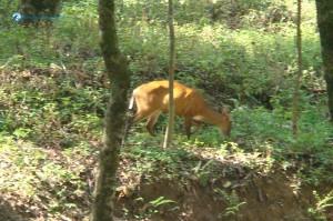 deerwalk at shivapuri