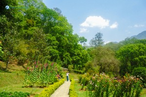 Godavari garden