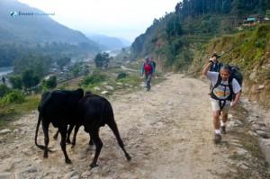 44. Nepalese Matador
