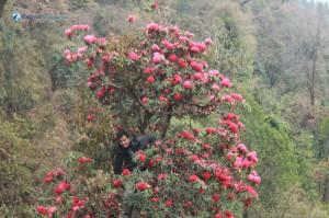 10. Pramesh in Rhododendron