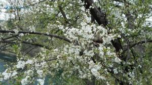 32. Blossom