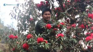 9. Vivek in Rhododendron