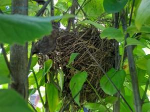 35. Birds nest