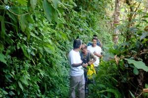 12. Through the jungle