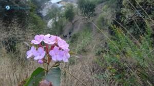 23. Flower