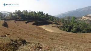 6. Landscape