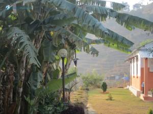14. Banana Tree