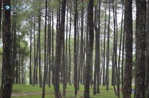 18. Tree Lines