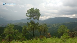 52. Tree taller than hill