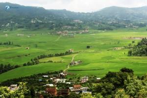 1. Green heaven