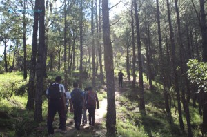 12. Pine Forest