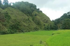 15. Green Paddys