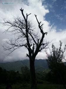 2. horror tree