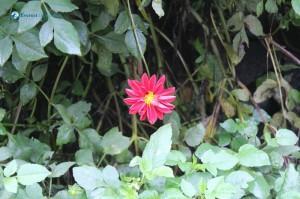 47. Flower