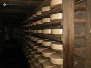 31. Cheesy Cheese