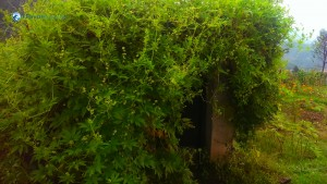 16. Toilet_Inside_Bushes