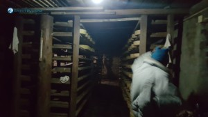 23. Cheese_Factory