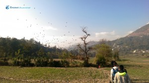 12. Birds