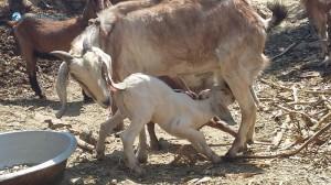 2. Motherhood