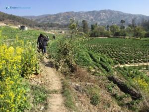 4.Through sesame and potato field