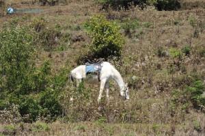 17) White Creature