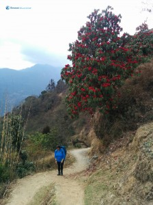 18. Beautiful trail