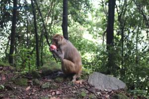 19. Monkey Do