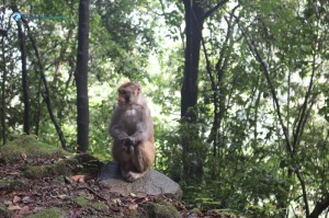 20. Monkey See