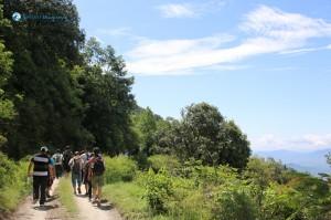 24. Jungle Walk