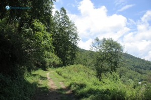 28. Lush Green Path