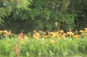 32. Flowers