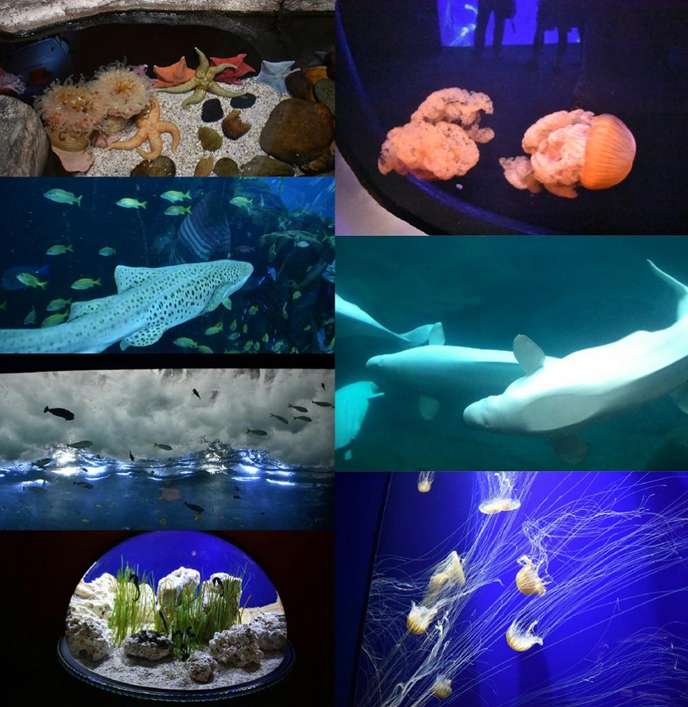 Up-close thrilling encounters with ocean dwelling animals at Georgia Aquarium